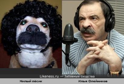 Милый пёсик напомнил Илью Олейникова.