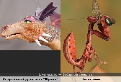 "Насекомое напомнило игрушечного дракона из ""Шрека"""