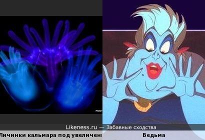 """Личинки кальмара под увеличением напомнили ведьму из """"Русалочки"""""""