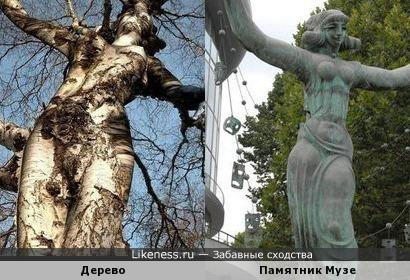 Ствол дерева похож на памятник Музе перед зданием Филармонии в Тбилиси