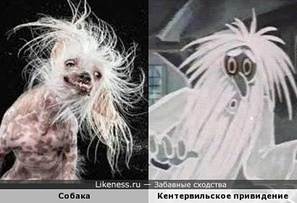 Собачка похожа на Кентервильское привидение