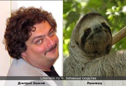 Дмитрий Быков похож на ленивца