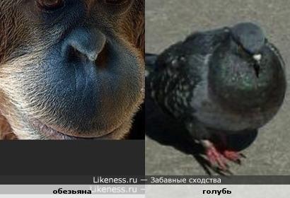 Ассоциации из животного мира
