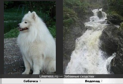 Собачка в струях водопада