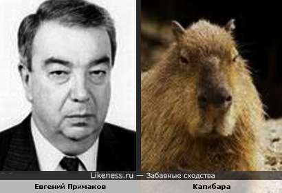 "Господин Примаков и ""господин трав"""