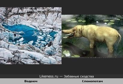Слонопотам пошел купаться