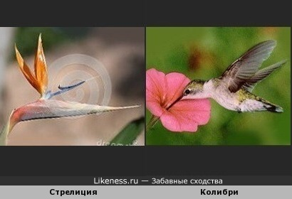 Райские создания