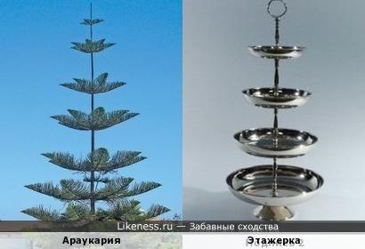 Дерево похоже на многоярусное блюдо