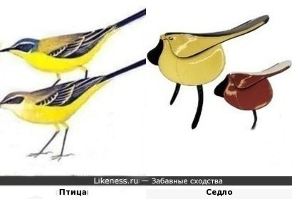 Оседлые птички)