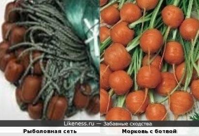 Поплавки рыболовной сети напомнили морковку с ботвой