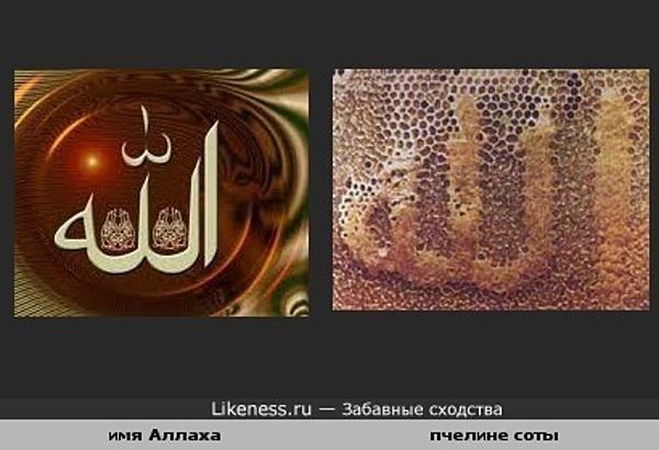 Пчелы оставили подпись Аллаха на стенке своего дома