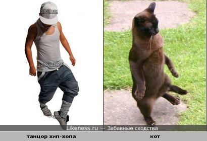 Хип-кот