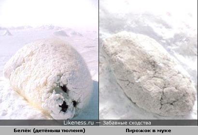 Тюленя в снегу как пирожок в муке