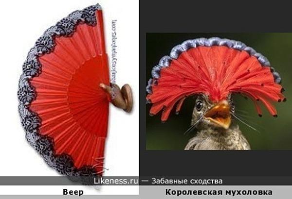 Королевская мухоловка похожа на веер