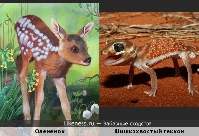 Ящерица похожа на олененка, только ушек не хватает