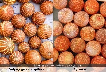 Гибрид дыни и арбуза похож на бусины