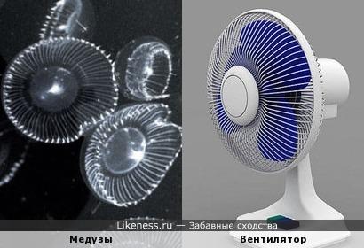 Светящиеся медузы похожи на сетки для вентилятора