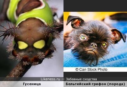 Осторожно! Злая гусеница