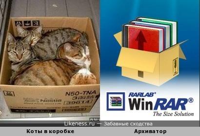 Коты.rar