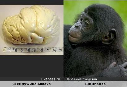 Самая большая в мире жемчужина напомнила голову шимпанзе