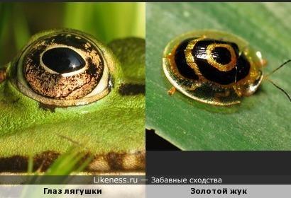 Глаза разбегаются ... как жуки