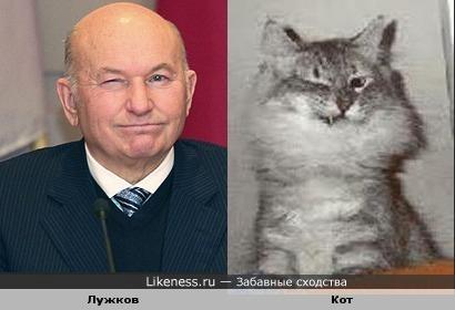 Лужков похож на кота
