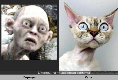 Кошка похожа на Горлума