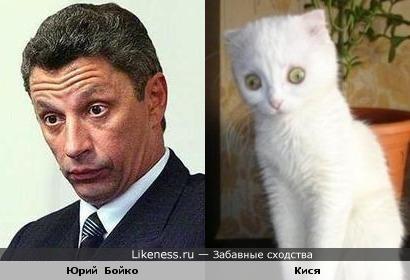 Бойко похож на кота