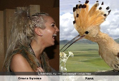 Ольга Бузова похожа на удода