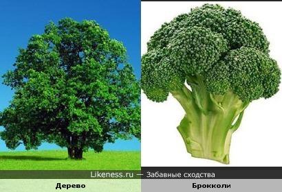 Брокколи похожа на дерево