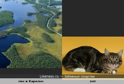 Участок леса в Карелии похож на лежащего кота