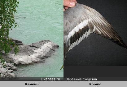 Камень похож на крыло