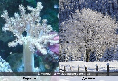 Коралл похож на дерево в снегу