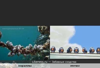 Кораллы или полипы на морском дне напомнили мне мультфильм про птичек