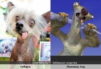 """Собака похожа на Сида из мультфильма """"Ледниковый период"""""""