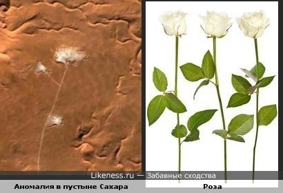 Аномалия в пустыне Сахара похоже на цветок