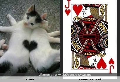 """Коты червей (продолжение темы """"Кошки-карты"""") ;)"""