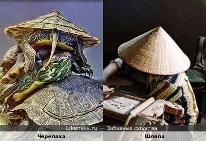 Панцирь черепахи похож на вьетнамскую коническую пальмовую шляпу нон
