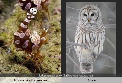 На хвостике морского жителя видна мордочка совы )))