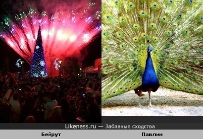 Новогодний салют в Бейруте на фоне елки похож на павлина