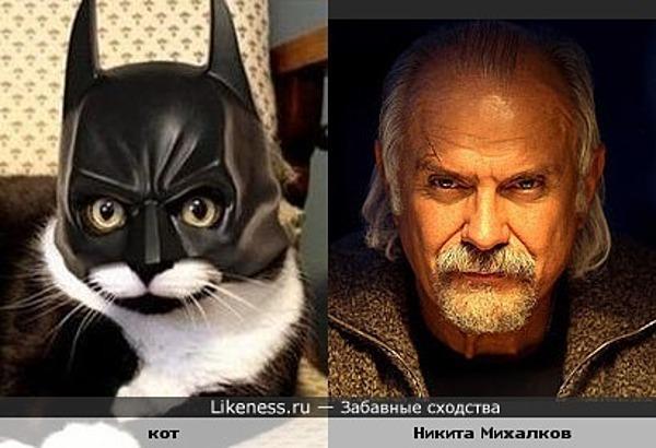 Кот в шлеме напомнил мне Никиту Михалкова
