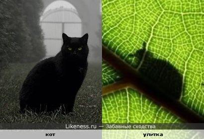Тень улитки похожа на кошку