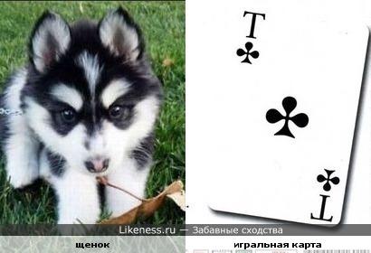Крестовый Тузик )))