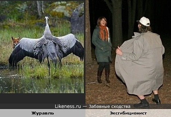 Журавль эксгибиционист ))))))