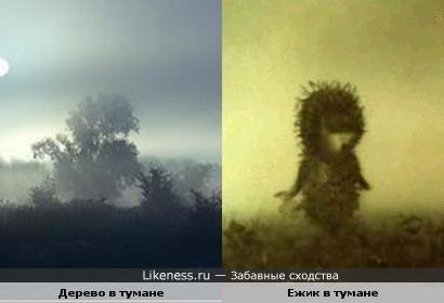 Ежик в тумане на самом деле существует )))))