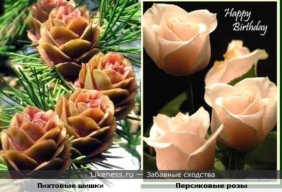 Шишки пихты похожы на розы