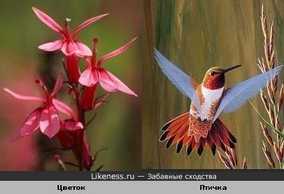 Цветы похожи птицу