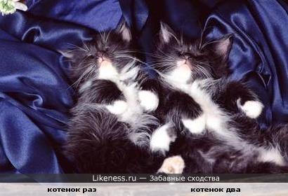 Близнецы мы по гороскопу )))