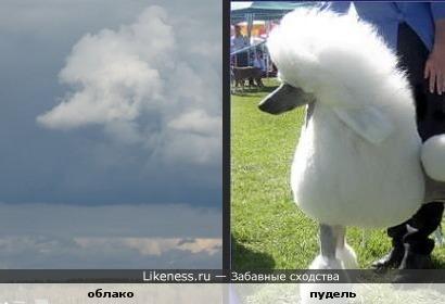 Вот такого небесного пуделя сфотографировала я на даче )))