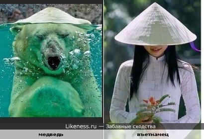 Медведь, нырнувший под воду, похож на въетнамца в конической шляпе